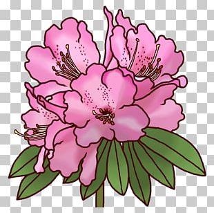 Rhododendron Subg. Hymenanthes Koka 滋賀県レクリエーション協会 Floral Design Rhododendron Brachycarpum F. Nemotoanum PNG