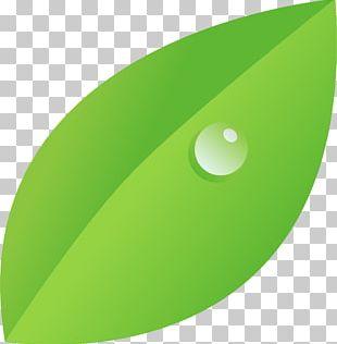 Drawing Drop Dew Leaf PNG