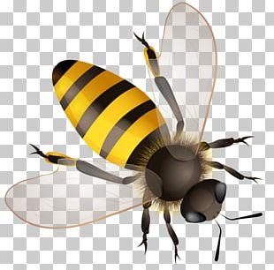 Worker Bee Hornet Bumblebee Africanized Bee PNG