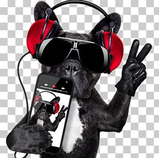 Dog Microphone Disc Jockey Stock Photography PNG