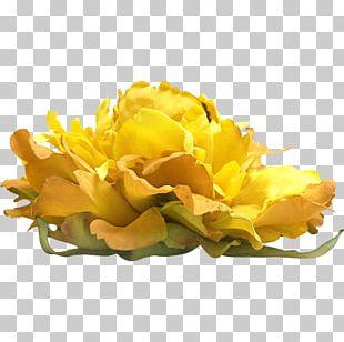 Cut Flowers Floristry Watercolour Flowers Flower Bouquet PNG
