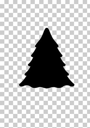 Evergreen Tree Pine Norway Spruce Fir PNG