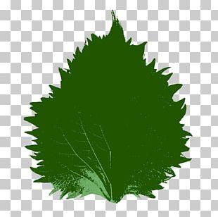 Beefsteak Plant Leaf Sushi Japanese Cuisine PNG