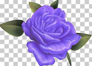 Beach Rose Rosaceae Flower Violet Blue PNG