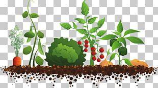 Garden Club Community Gardening Master Gardener Program PNG