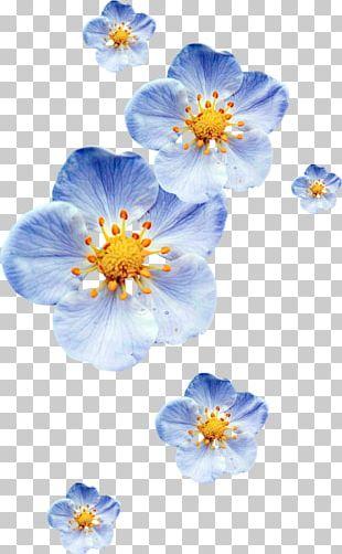 Petal Blue Portable Network Graphics Color Flower PNG