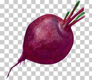 Purple Radish Vegetable PNG