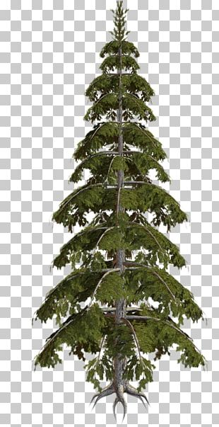 Spruce Christmas Tree Fir Christmas Ornament Pine PNG