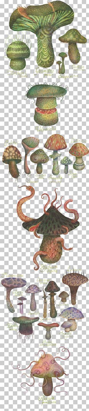 Drawing Botanical Illustration The Fungus Kingdom PNG