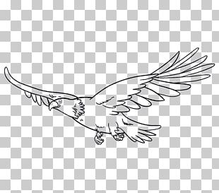 Drawing Bird Eagle Line Art PNG