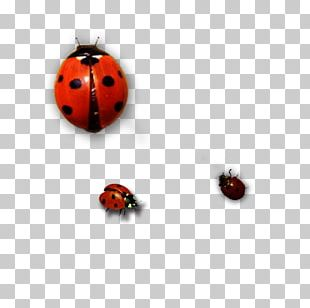 Ladybird Insect PNG