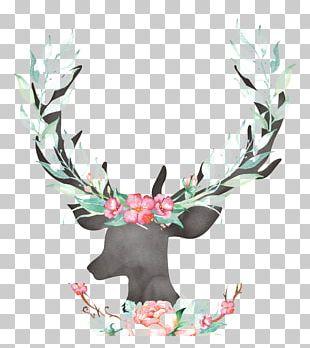 Reindeer Antler Deer Horn PNG