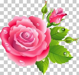 Rose Pink Flowers Drawing PNG