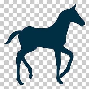 Tennessee Walking Horse Mule Silhouette Colt PNG