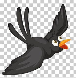 Bird Crows Cartoon PNG