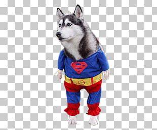Siberian Husky Clark Kent Pet PNG