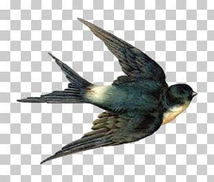 Barn Swallow Bird Flight PNG
