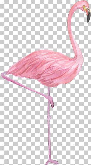 Flamingo Drawing Watercolor Painting PNG