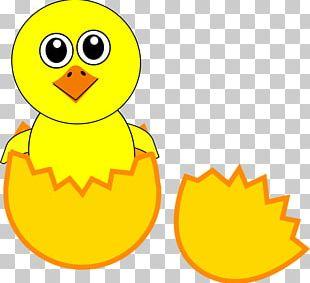 Chicken Cartoon Egg PNG