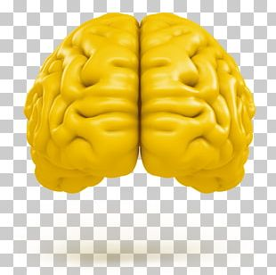 Human Brain Tremella Mesenterica Neuroimaging Agy PNG