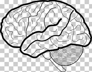 Brain Working Memory Coloring Book PNG