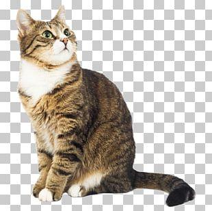 Cat Dog Kitten Pet Dentistry PNG