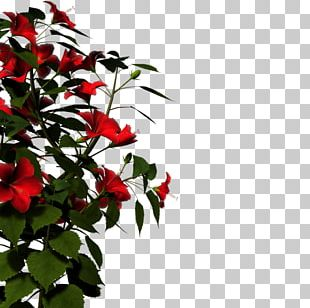 Display Resolution High-definition Television High-definition Video PNG