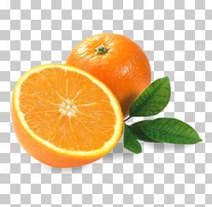 Orange Juice Smoothie Lemon Bitter Orange PNG