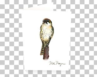 Owl Buzzard Hawk Fauna Beak PNG