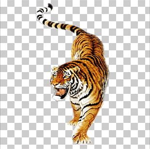 South China Tiger Tiger Balm Siberian Tiger Painting Tiger In Chinese Culture PNG