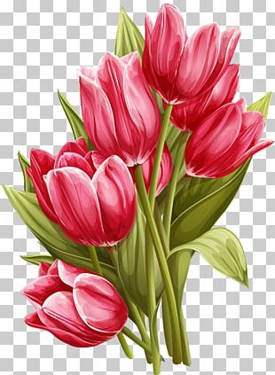 Tulip Flower Watercolor Painting PNG