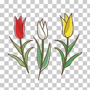 Tulip White Flower Yellow Graphics PNG