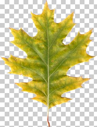 Autumn Leaves Leaf Photography PNG