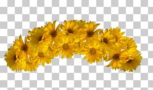 Flower Yellow Color PNG