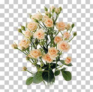 Garden Roses Cabbage Rose Cut Flowers Floral Design PNG