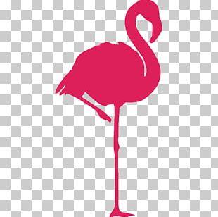 Greater Flamingo Bird American Flamingo Sticker PNG