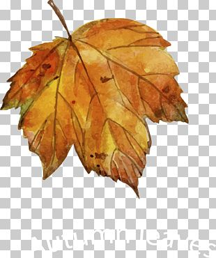 Leaf Autumn Drawing Euclidean PNG