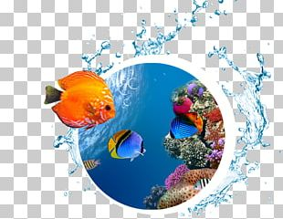 Desktop Sea High-definition Television Underwater Coral Reef PNG