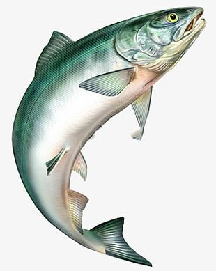 Jumping Fish PNG