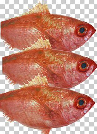 Northern Red Snapper Fish Products Oily Fish PNG
