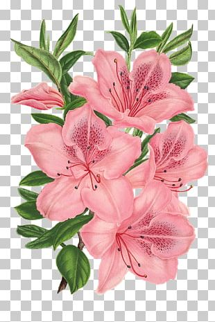 Pink Bunch Drawing Pink Flowers PNG