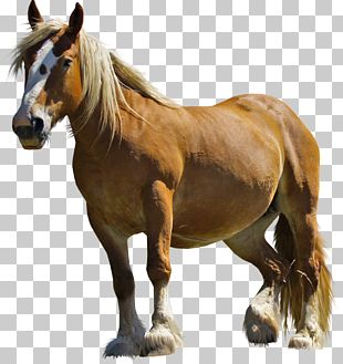 Arabian Horse Chevrolet El Camino Insurance PNG