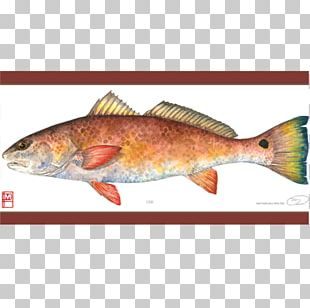 Salmon Painting Northern Red Snapper Fish Products Art PNG