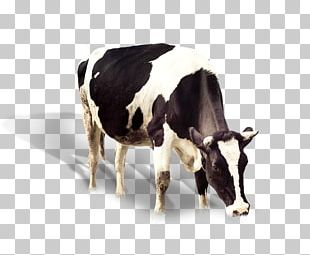 Dairy Cattle Banana Flavored Milk Ox PNG