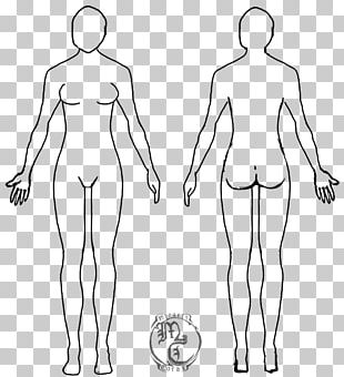 Female Body Shape Human Body Diagram Drawing Woman PNG