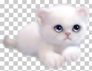 Kitten Whiskers Burmilla Malayan Cat Persian Cat PNG