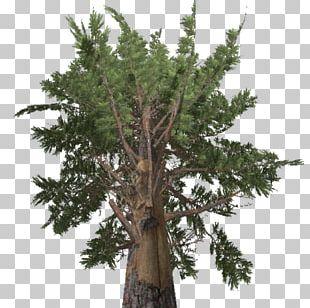 Farming Simulator 17 Larch Pine Tree Spruce PNG