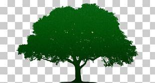 Portable Network Graphics Tree Oak PNG
