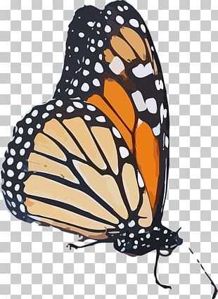 Monarch Butterfly Queen Insect Wing PNG