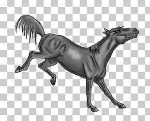 How To Draw A Horse Bucking Stallion Drawing PNG